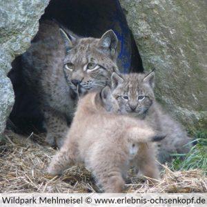 Wildpark Mehlmeisel am Ochsenkopf